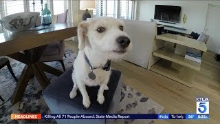 KTLA - Loews Santa Monica Beach Hotel - Puppy Love