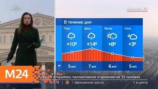 """Смотреть видео """"Утро"""": теплая погода ожидается в столичном регионе 10 апреля - Москва 24 онлайн"""