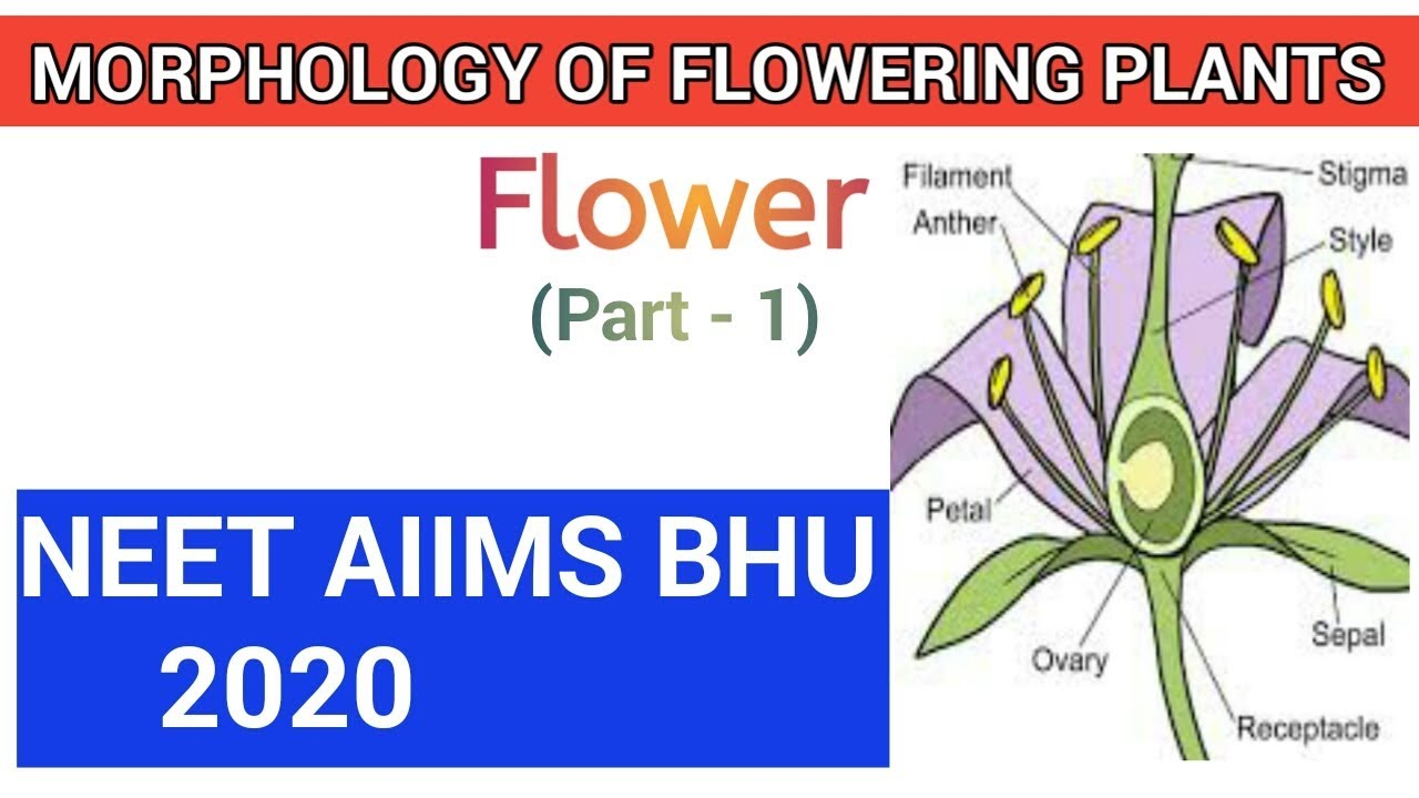 Structure of flower and its parts   Parts of a flower ...