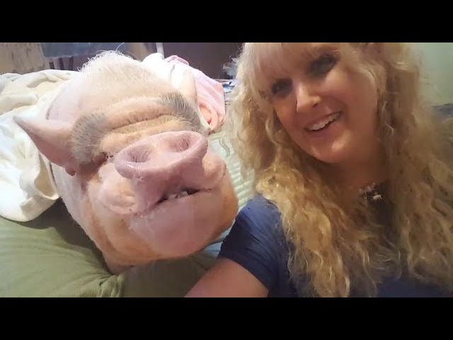 smiling-pig-changes-little-girl-s-life