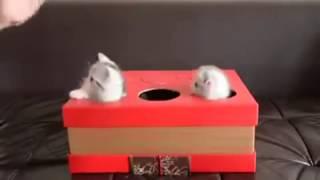 Смешно. Котят  бьют по голве молотком. Забавная версия игры аркадной игры whack-a-mole