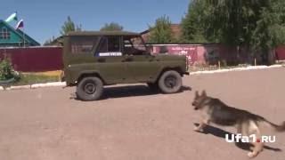 Собака на страже закона