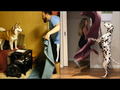 #WhatTheFluffChallenge compilation: The best what the fluff videos