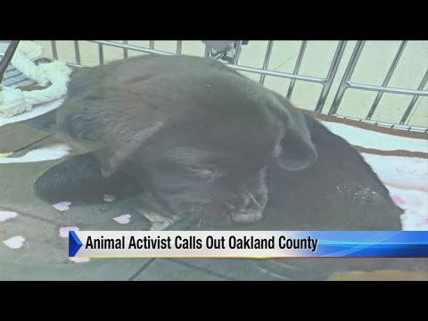 Activist group calls out Oakland County Animal Control
