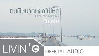 ทนพิษบาดแผลไม่ไหว [Acoustic Version] - Potato [Official Audio]