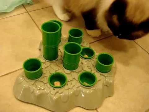 Ragdoll Cats Check out Aïkiou Stimulo Cat Feeding Station - ねこ - ラグドール -- Floppycats