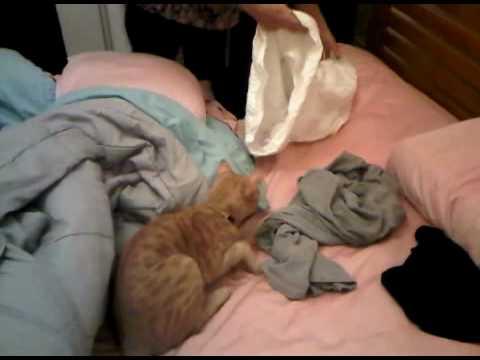 My crazy cat Reggie's AMAZING pillow case case trick