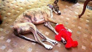 rescatamos-a-un-perrito-malherido-y-nos-lo-llevamos-a-los-u-s-a