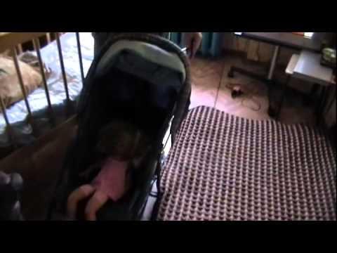 девочку порят по жести видео