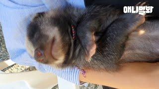 천사같은 아기 오소리의 목숨을 살렸습니다 그리고 3개월…