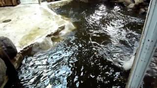 Großes Nilpferd-Wasser Platsch oder Catjy