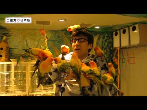 鸟咖啡厅 跟猫头鹰鹦鹉一起玩! 二重丸◎日本版