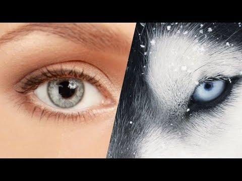 TEST: Hangi Hayvanın Görüş Yeteneğine Sahipsin