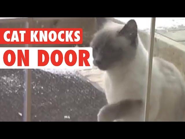 Knock Knock Cat