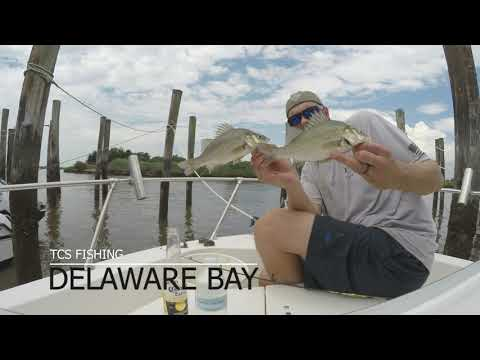 Delaware Bay Perch Fishing