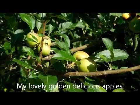 How to keep animals from fruit trees squirrels ants - How to keep raccoons out of garden ...
