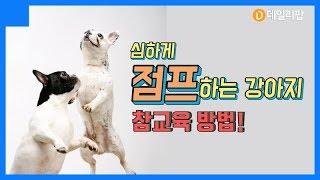 격하게 점프하는 강아지, 참 교육 방법! [데일리팝X팅커벨프로젝트]