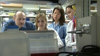UC Davis Newswatch: Stem Cell Interns