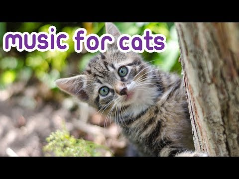 Music for cats: 15 Hours Cat Music to Help Separation Anxiety in Cats!