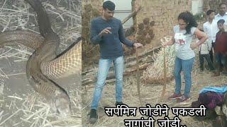 | नागसापांचा मिलनकाळ सुरू आहे | सतर्क रहा | two cobras rescued by sarpmitra Anand & Nirzara Chitti |