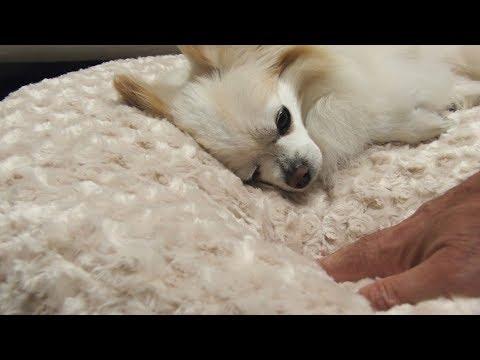 peluche-plush-cuddle-cloud-dog-beds-&-blankets---fawn-rose-petal