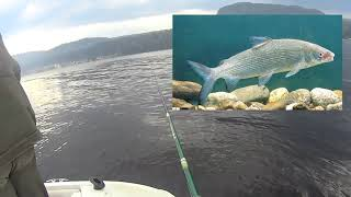 Рыбалка на Телецком озере с инструктором