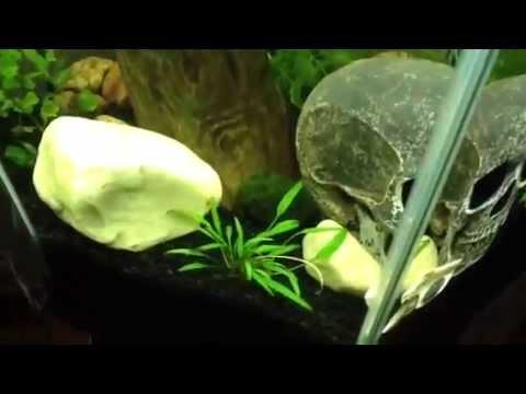30-gallon-hexagon-or-tall-aquarium