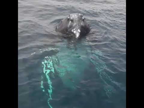 None - Just A Humpback Whale Saying Hello!