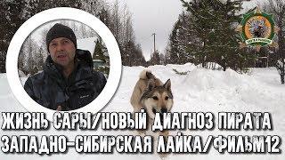 Жизнь Сары/Западно-сибирская лайка/Пират/Фильм 12