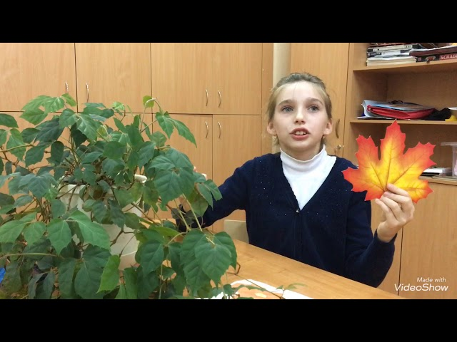 Изображение предпросмотра прочтения – АнастасияСаутина читает произведение «Когда я гляжу на летящие листья» М.И.Цветаевой