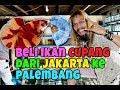 Beli Ikan Cupang Dari Jakarta Ke Palembang Biar Trending  Seperti Diwan  Mp3 - Mp4 Download