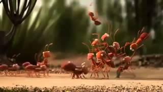 мультфильмы для взрослых видео команда муравьев.