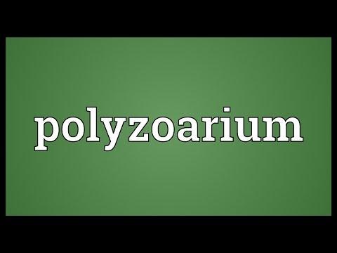 Header of polyzoarium