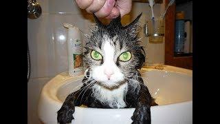 СМЕШНЫЕ КОТЫ И КОШКИ 2018 #2 лучшие видео про кошек