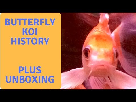 Butterfly Koi History - Next Day Koi Unboxing