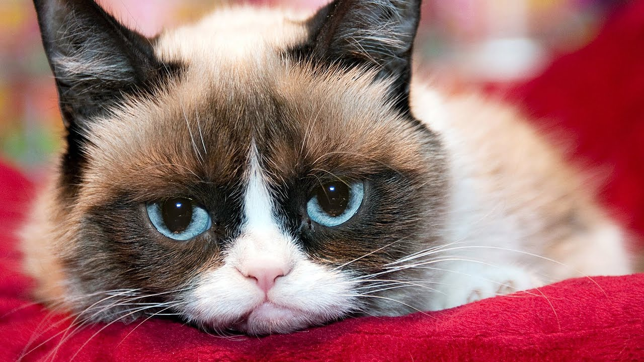 Grumpy Cats Worst Movie Ever First Look