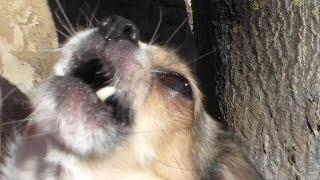 Поющая собака. Часть 2. Прикол