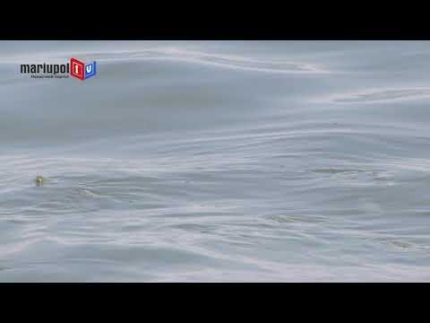 Очередное нашествие: Море у Мариуполя бурлит от рыб