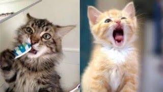 Смена зубов у котят/Особенности ухода в этот период!