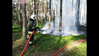 Alarmowo pluton WOO oraz akcja gaśnicza pożaru lasu w Petrykach