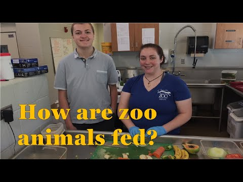 Meal preparation for the Animals (Mesker Park Zoo) - Episode 170