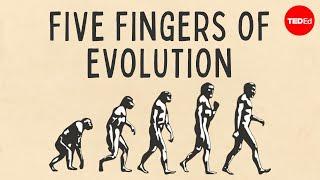 Five fingers of evolution - Paul Andersen