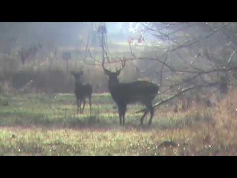 Mid December Rut Hunt In The Mississippi Delta