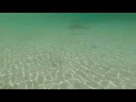 Great Abaco Vacation Gopro