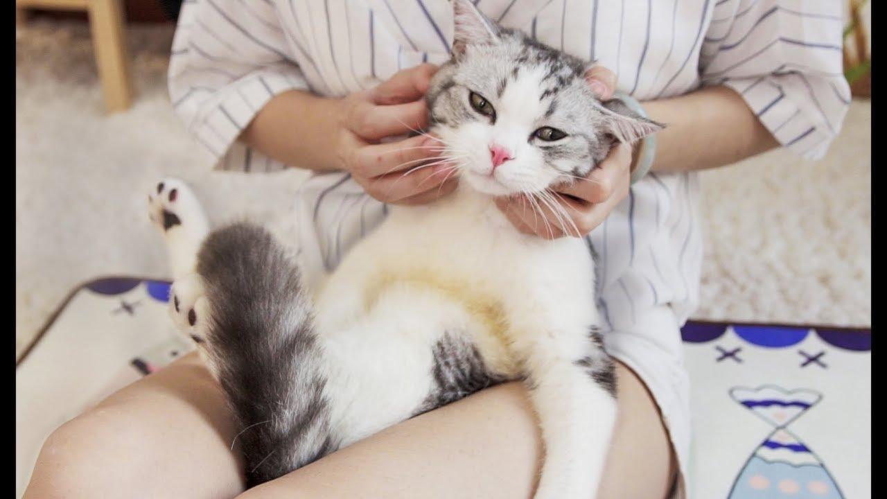 【花花与三猫】给猫咪做按摩,只需一招让它爽翻天,每天粘着你不放