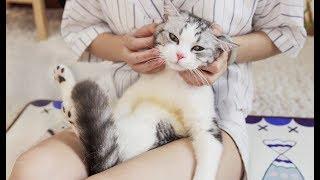 给猫咪做按摩,只需一招让它爽翻天,每天粘着你不放