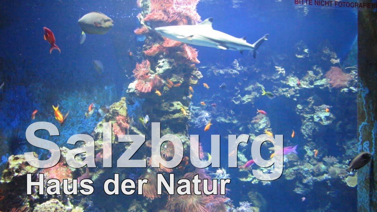 Haus der Natur in Salzburg Aquariumimpressionen