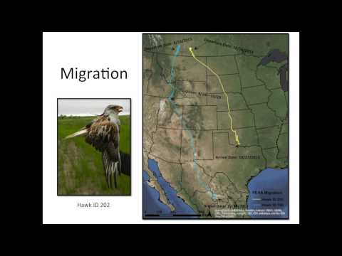 Erin Bayne - Evaluating the Ecological Risk of Oil and Gas Development on Ferruginous Hawks