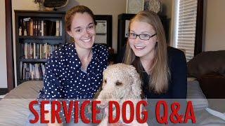 SERVICE DOG Q&A