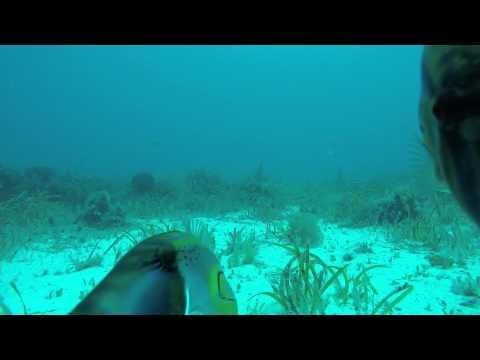 Port Lincoln Fish